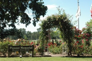 """Glorious Rose Arch in the """"Pioneer Memorial Garden"""" in May"""